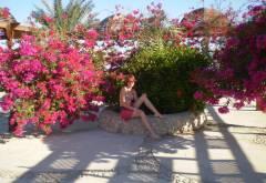 ����� Sultan Beach: ����������.